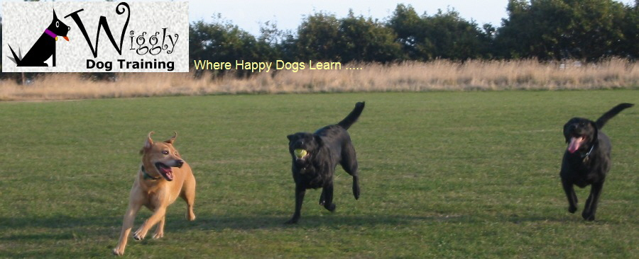 Where Happy Dogs Learn .....